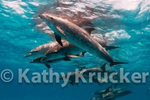-019Bahamas_Dolphins2-126
