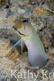 Cayman-005