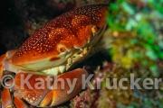 -002Honduras_Cocos_seamount