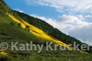 -013Kathy_Krucker_-_2013_CB_Land_Trust_Calendar05
