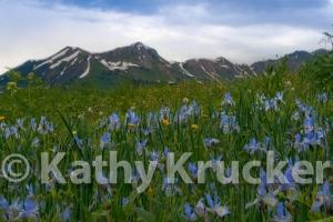 -016Kathy_Krucker_-_2013_CB_Land_Trust_Calendar08