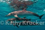 -010Bahamas_Dolphins2-52
