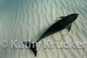 -011Bahamas_Dolphins2-62