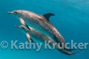 -023Bahamas_Dolphins2-137-Edit