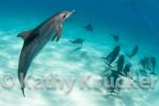 -022Bahamas_Dolphins2-157