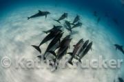 -024Bahamas_Dolphins2-156