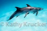 -026Bahamas_Dolphins2-98