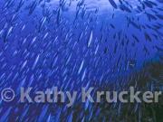 -012WT_Kathy_Krucker_1