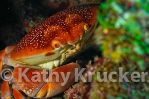 -007Honduras_Cocos_seamount
