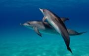 Bahamas_Kathy Krucker