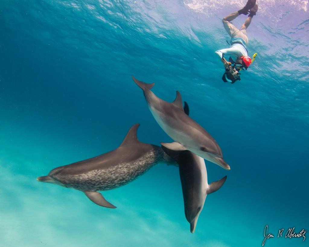 KK snorkle w. dolphins