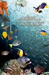 Sea of Cortez Poster